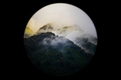 nature, forests, trees, fog, light, leaks, vignette, sharp