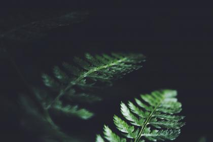 dark, green, leaves, plant, nature, blur