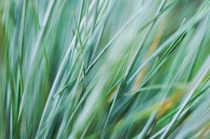 nature, grass, sway, field, macro, still, bokeh, green
