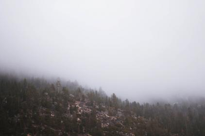 nature, mountains, slope, trees, plants, rocks, fog