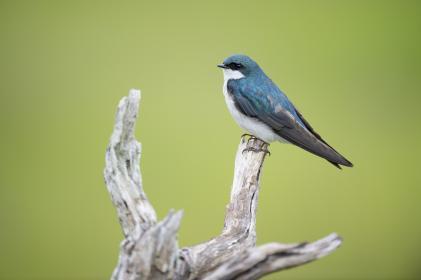 animals, birds, beautiful, gorgeous, feathers, beak, perch, warbler, tree, branch, green, still, bokeh