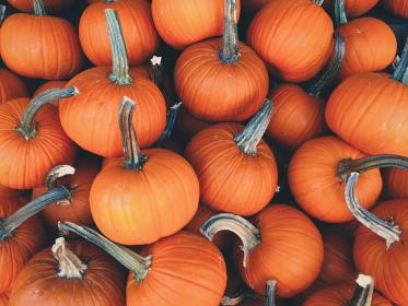 orange, pumpkins, halloween, farm