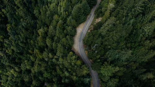 nature, forests, trees, pine, road, path, street, winding, soil, rocks, lush, green