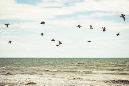 nature, landscape, water, ocean, sea, waves, surface, ripples, birds, flying, flight. minimalist