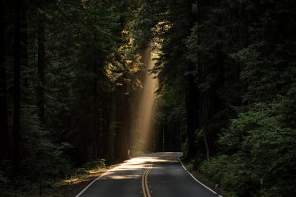 nature, roads, paths, streets, asphalt, forests, trees, rays, light, beam, lines, perspective, bend