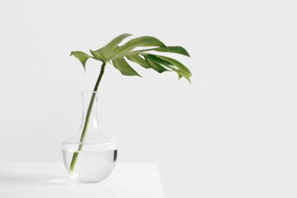 still, items, things, plant, stem, leaves, vase, water, transparent, clear, table, wall, bokeh, minimalist