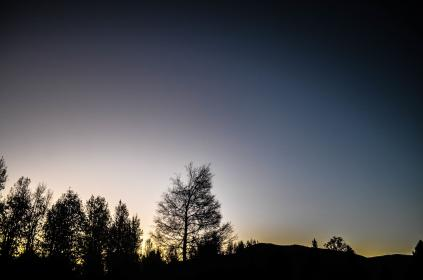 nature, landscape, forests, trees, sky, clouds, horizon, gradient, blue, purple, black, shadows, light, silhouette