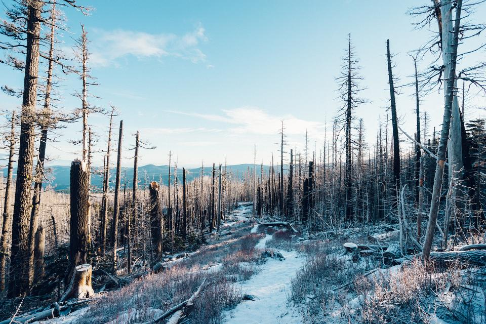 trees, woods, forest, mountains, trail, path, snow, cold, winter, sky, hills, logs