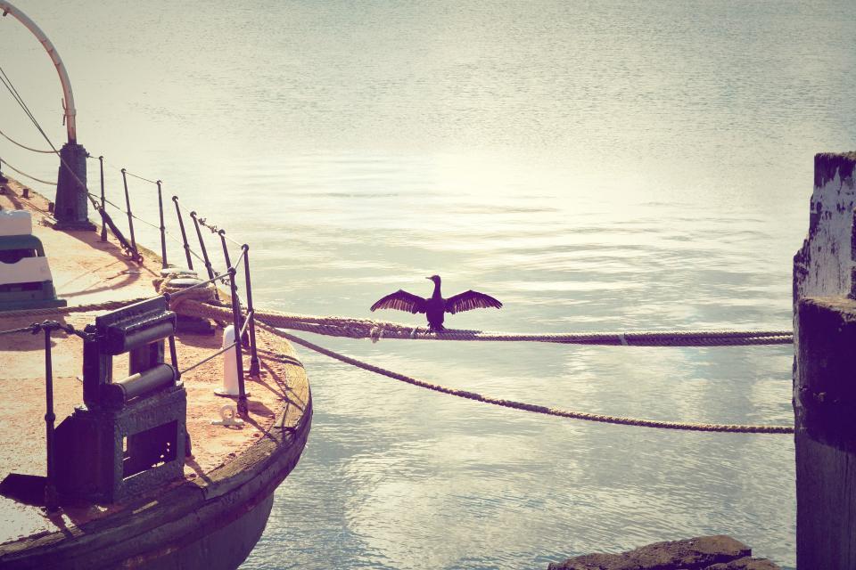 bird, water, boat, dock, rope, wellington, new zealand