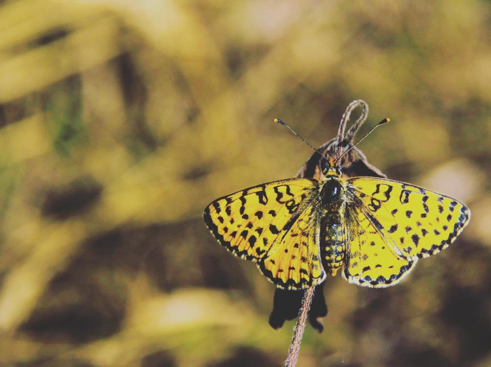 animals, insects, butterfly, majestic, black, yellow, macro, still, bokeh
