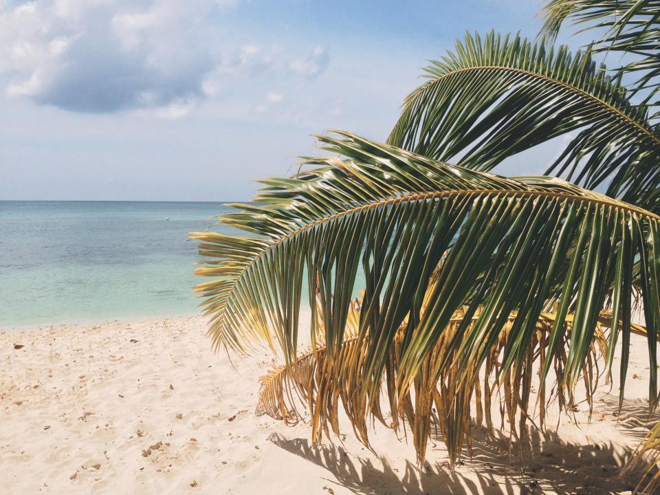beach, sand, tropical, vacation, palm tree, leaves, ocean, sea, water