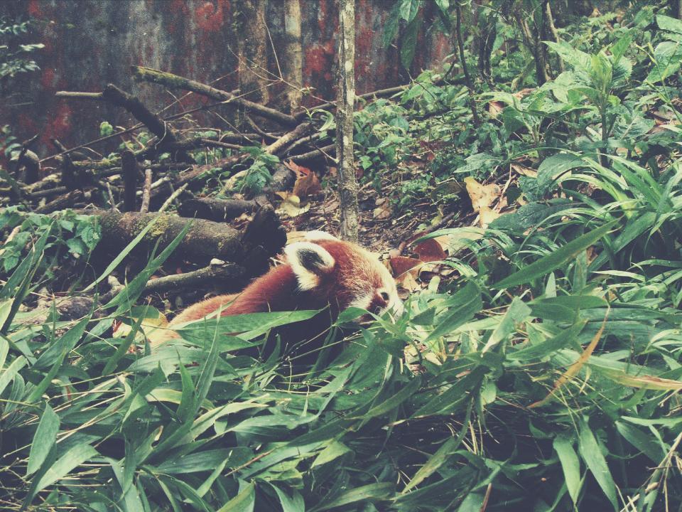 animals, plants, leaves, green, fur, wood, woods