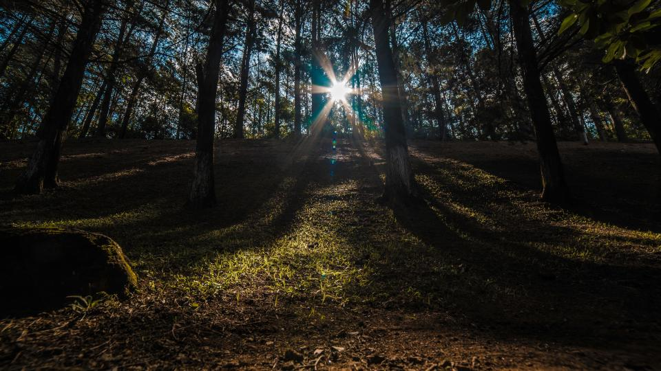 nature, landscape, forest, woods, sunny, sunlight, sunshine, trees, grass, wildlife, camping, bonfire, travel, adventure, trek