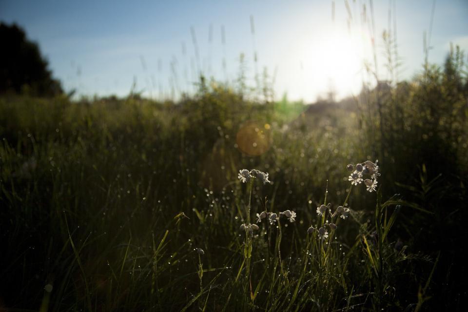 sky, blue, sun, shining, daisy, flower, field, green