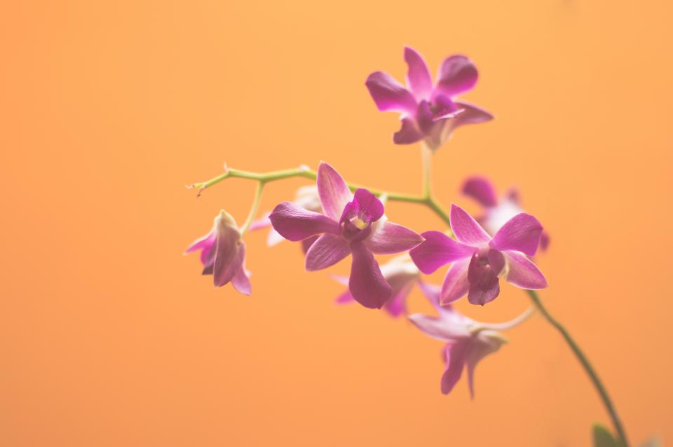 purple, flowers, nature, orange