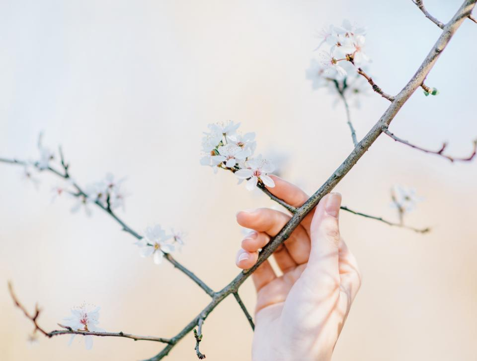 flowers, nature, blossoms, branches, white, petals, bokeh, outdoors, garden, girl, woman, people, hand