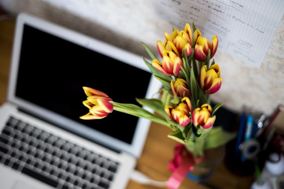 plant, decor, desk, office, business, laptop, computer, technology