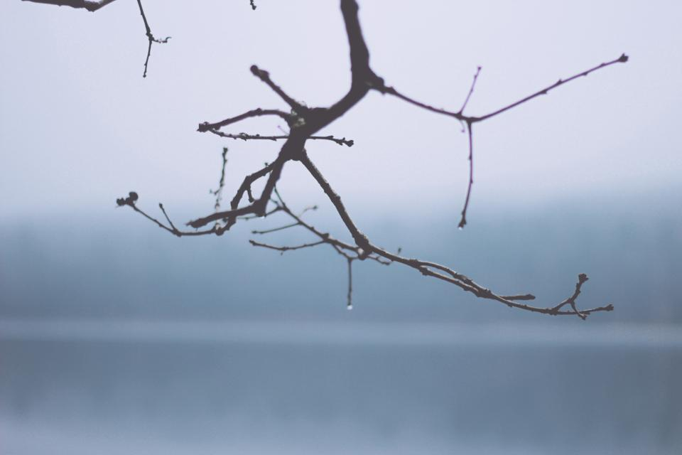 tree, branch, nature, fog, foggy