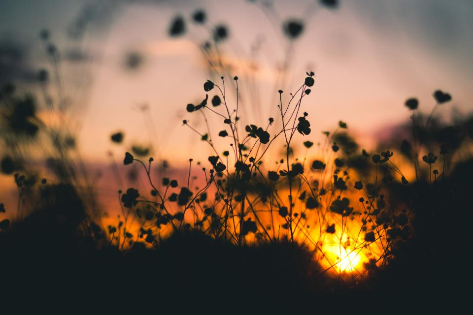 sunset, dusk, silhouette, shadow, plants, flowers, garden, nature