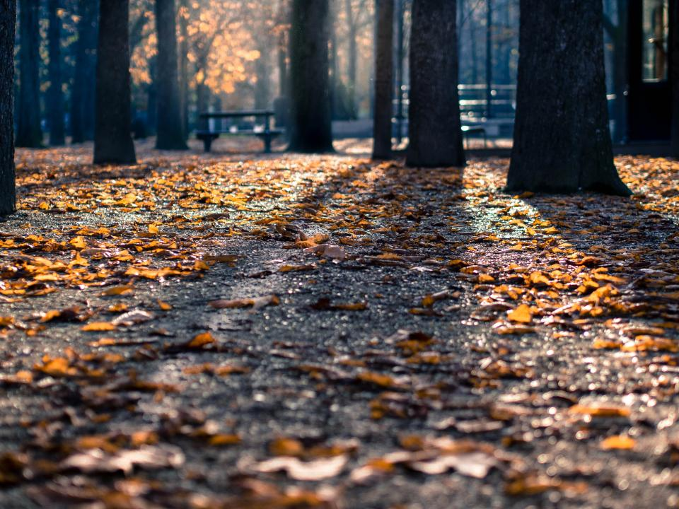 park, trees, leaves, autumn, fall, nature