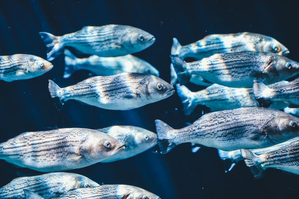 fish, school, nature, underwater, water, sea, ocean