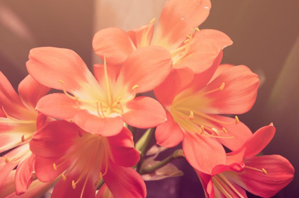 pink, orange, flower