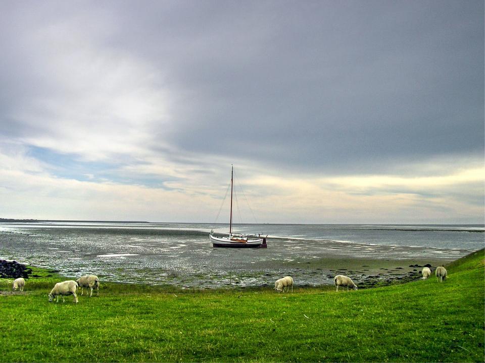 sailboat, water, ocean, sea, grass, field, animals, sheep, sky, grey, clouds