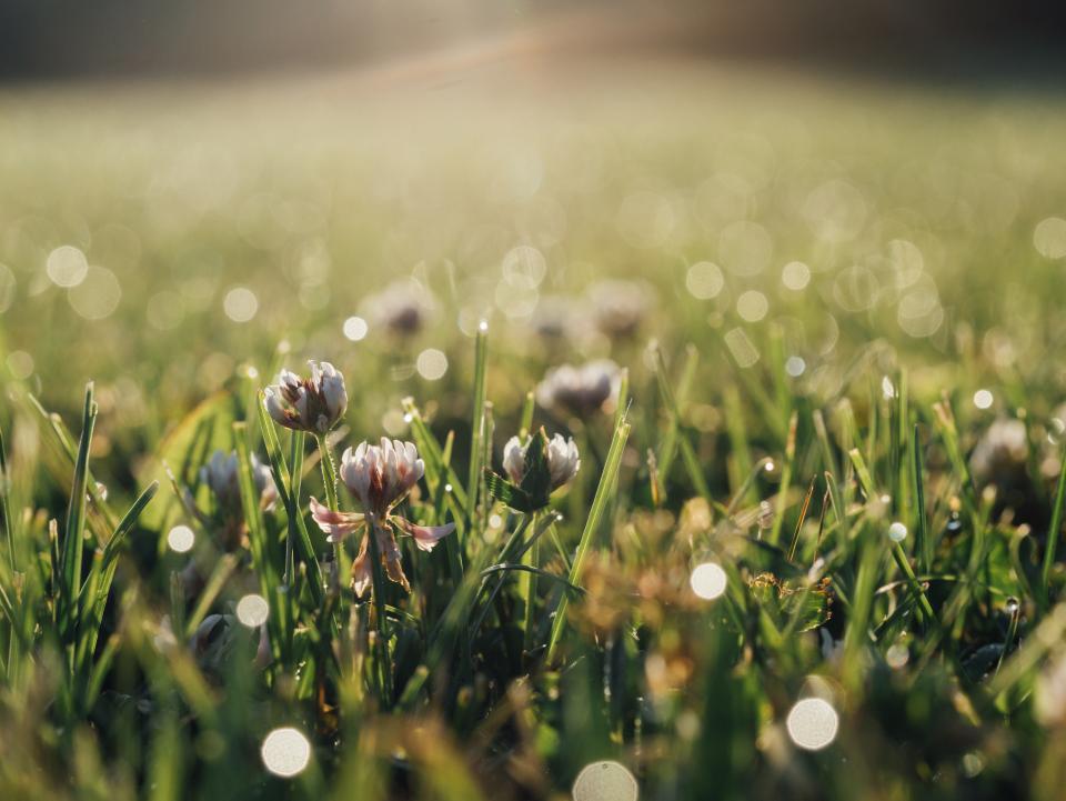 green, grass, flowers, nature, field, sunlight