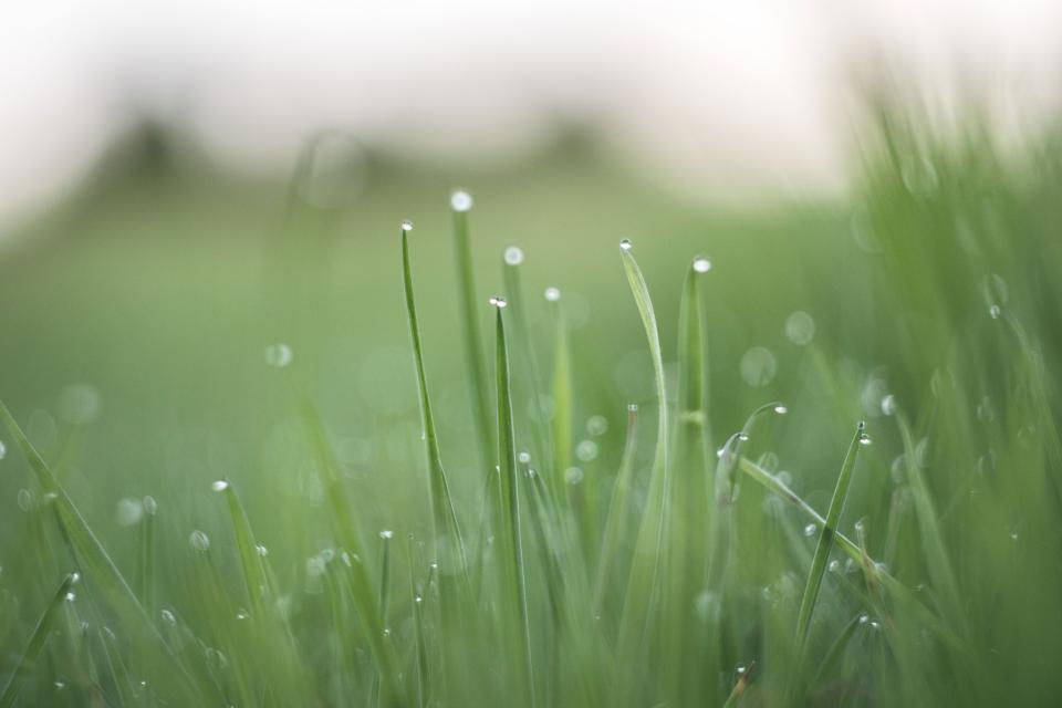 green, grass, nature, outdoors, wet, raining, dew, blurry