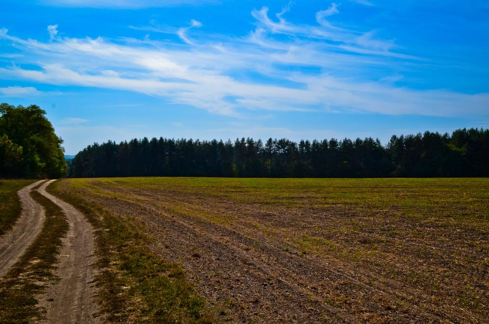 dirt, road, rural, countryside, farm, agriculture, trees, blue, sky, summer, sunshine