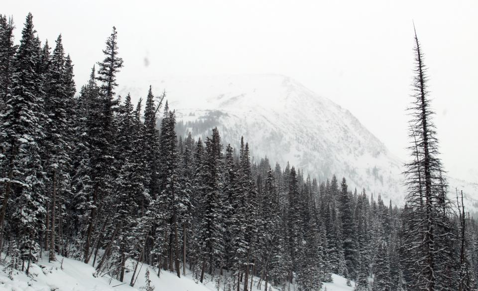 trees, forest, woods, nature, winter, snow, cold, mountains
