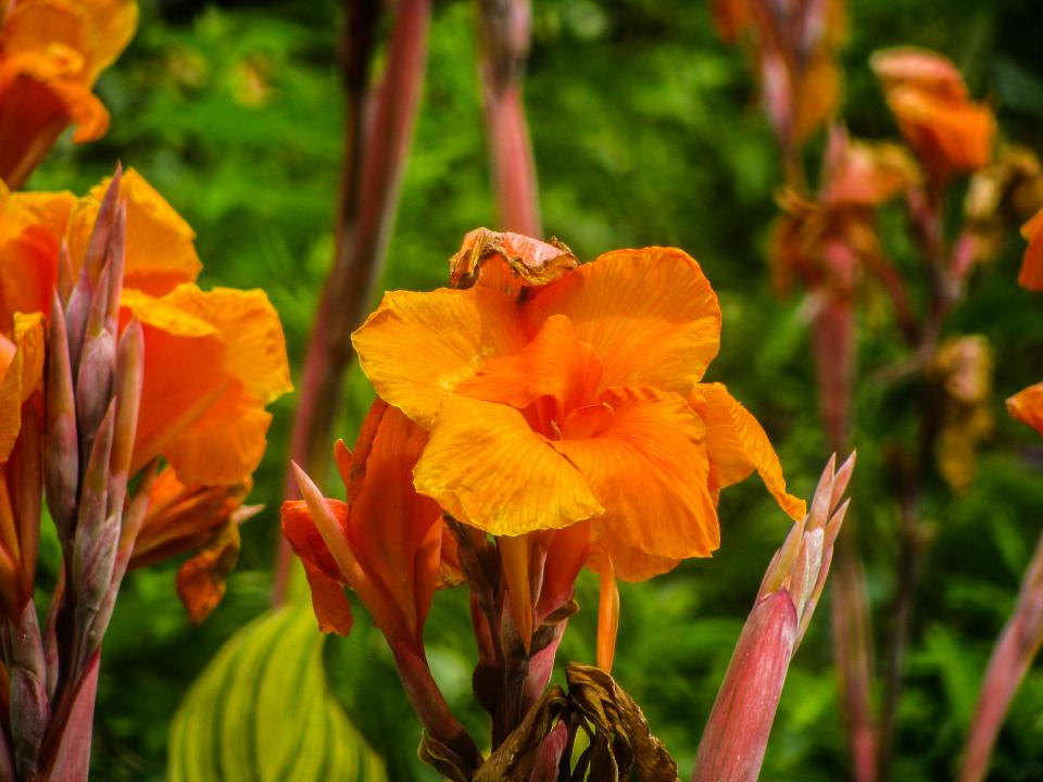 orange, flowers, garden