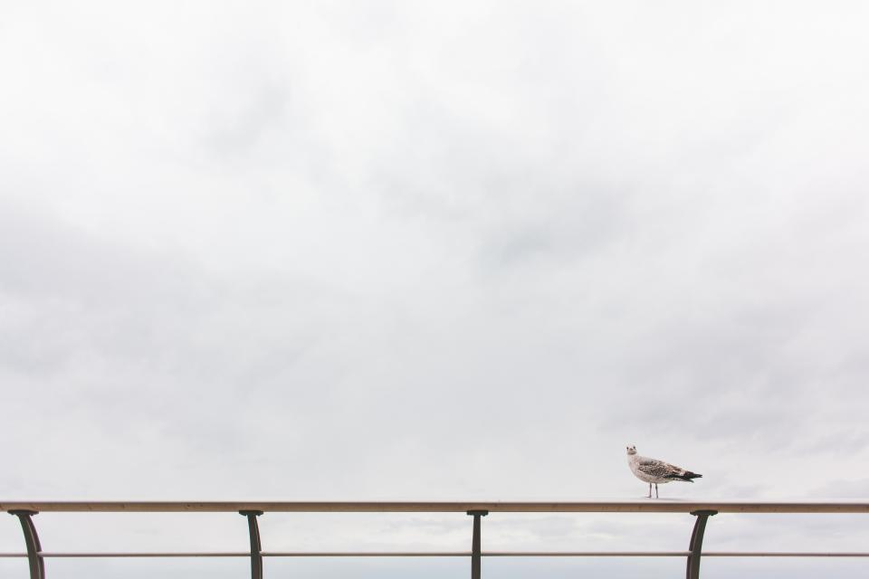 seagull, bird, animals, railing, sky, clouds, cloud, grey
