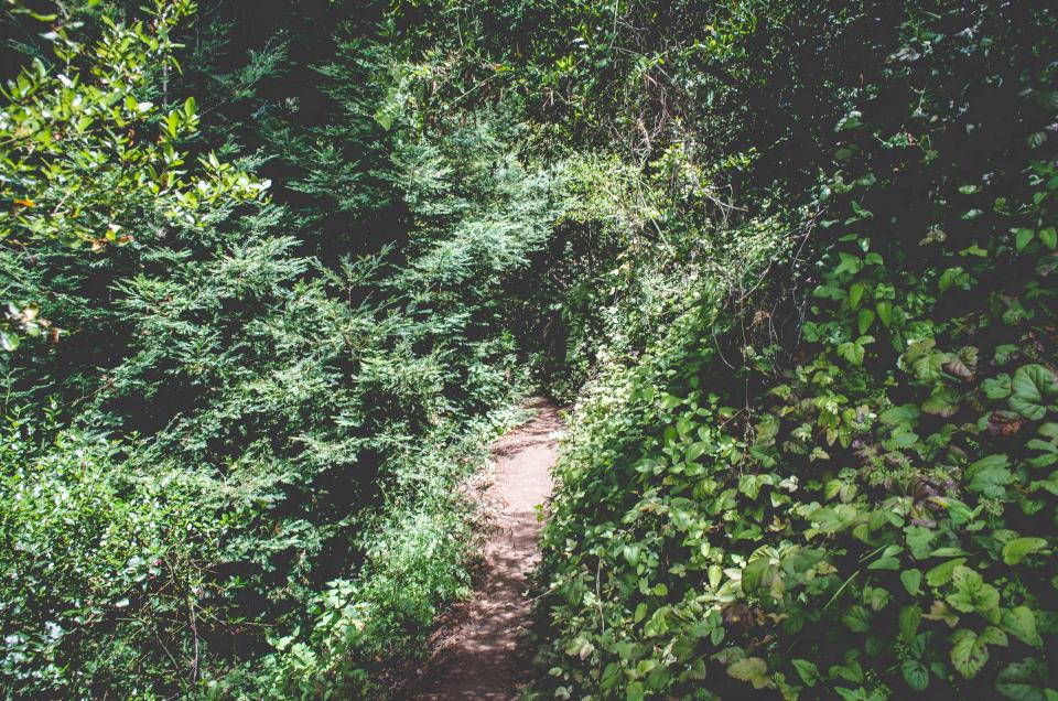 green, trees, leaves, shrubs, bushes, trail, path, hiking, trekking, outdoors, nature, summer