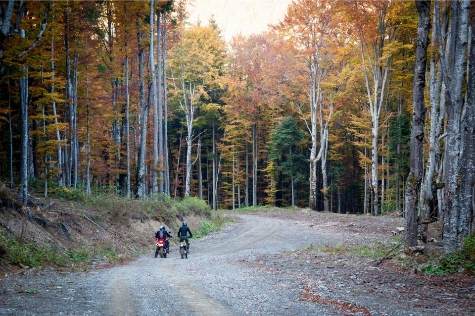 dirt bikes, motorbikes, bikers, road, trees, forest, woods, autumn, fall