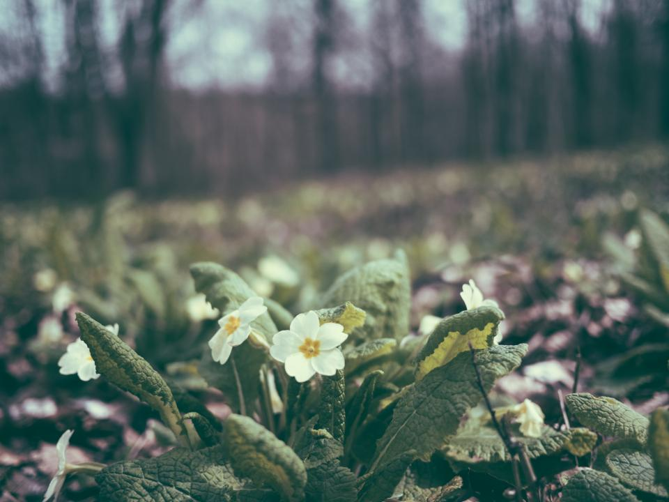 flowers, nature, blossoms, white, stems, stalks, petals, leaves, plants, field, nature, trees, macro, bokeh, outdoors