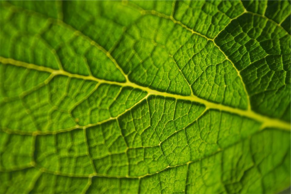 green, leaf