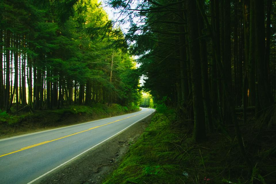rural, road, pavement, trees, forest, woods, nature