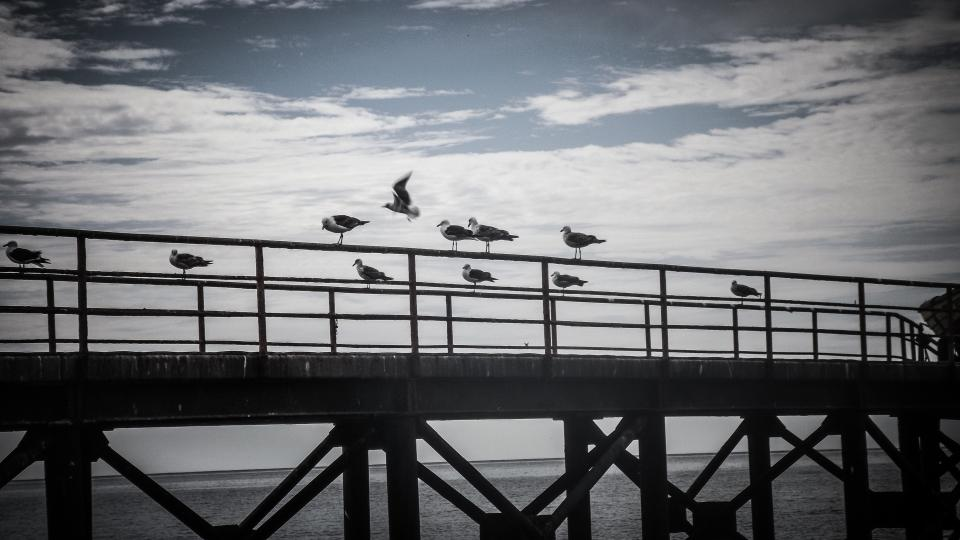 bridge, ocean, sea, water, birds, sky, clouds