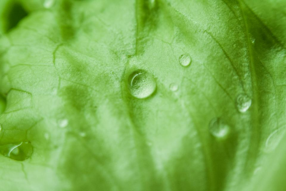 green, leaves, wet, raining, rain drops, nature