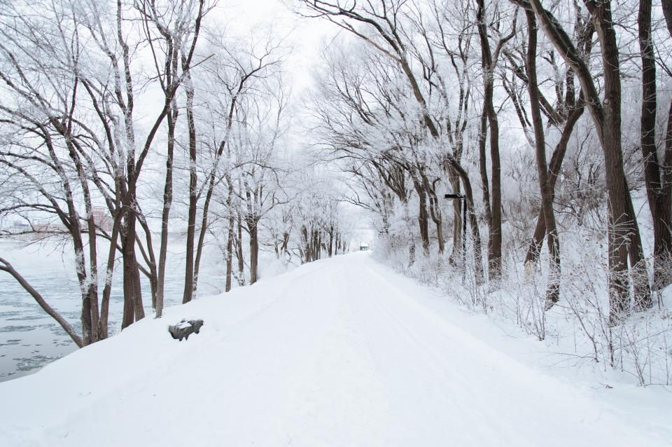 winter, snow, cold, road, trail, trees, branches, outdoors, christmas