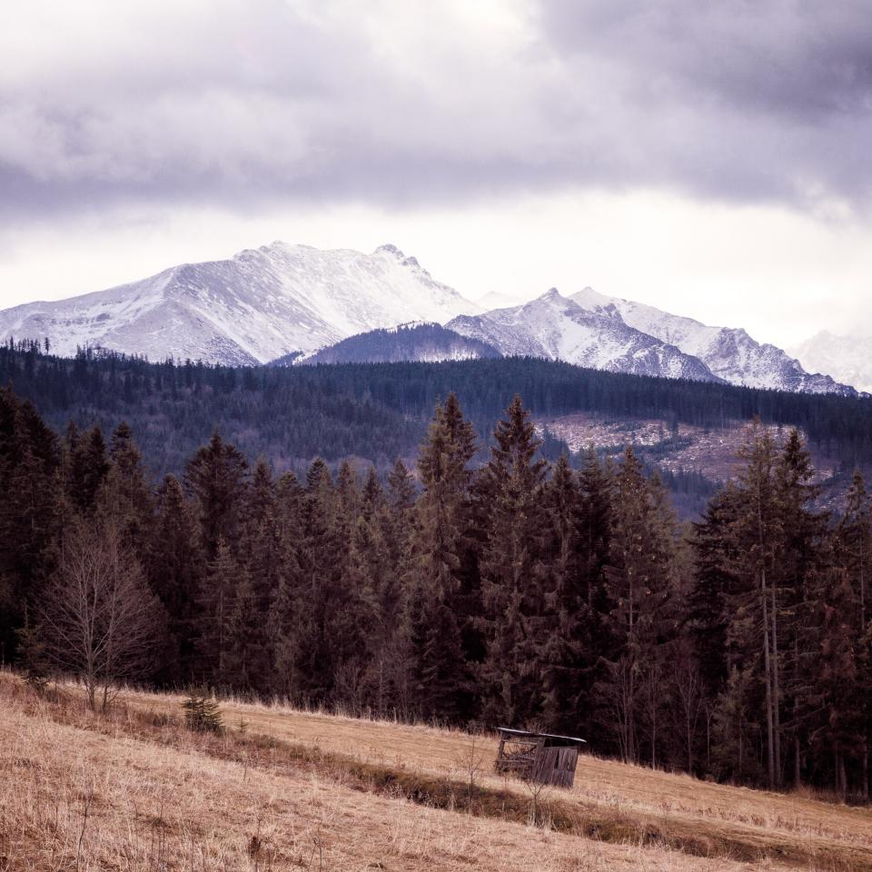 landscape, mountains, trees, hills, forest, woods, fields, grass, snow, peaks, clouds, cloudy