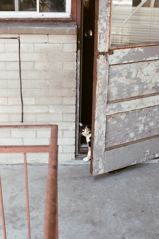 cat, pet, animal, door, entrance, lock, railing, old, rust, brick