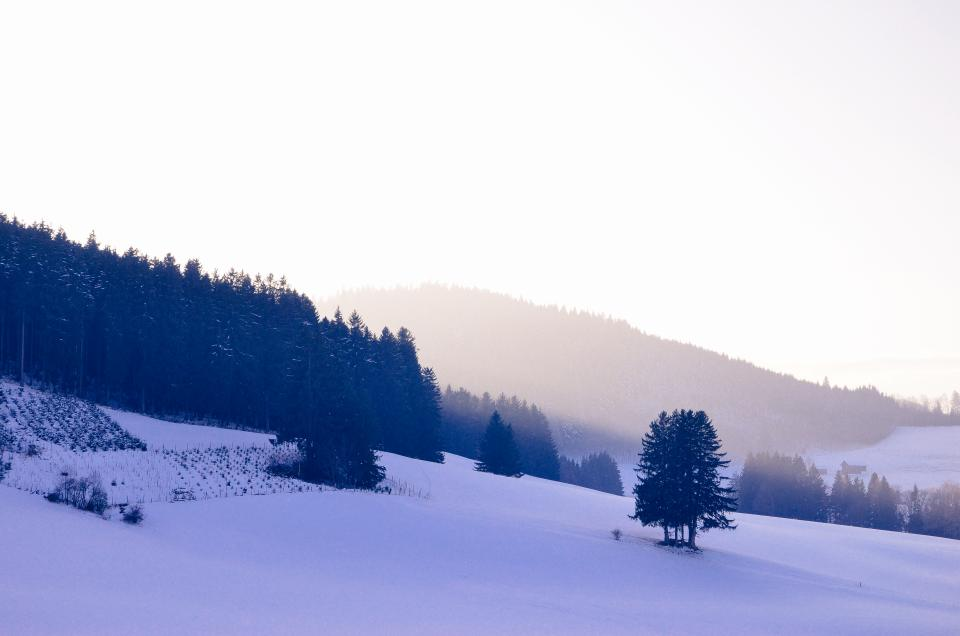 mountains, trees, hills, winter, snow, cold