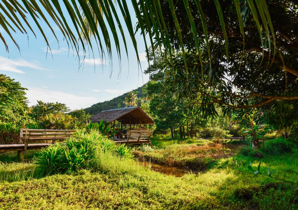 green, grass, nature, hut, rural, countryside, tropical, sunny, village