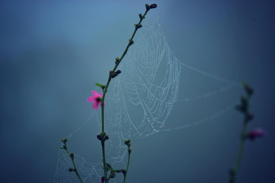 nature, flowers, branches, stalks, stems, spider, web, pink, bokeh, still