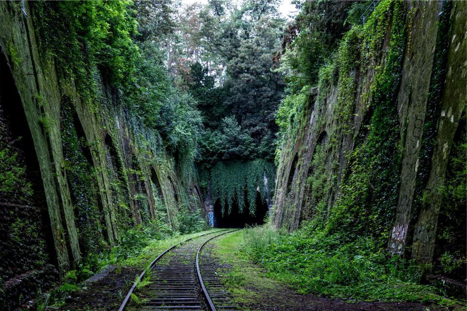 railroad, railway, train tracks, transportation, green, moss, plants, trees, vines