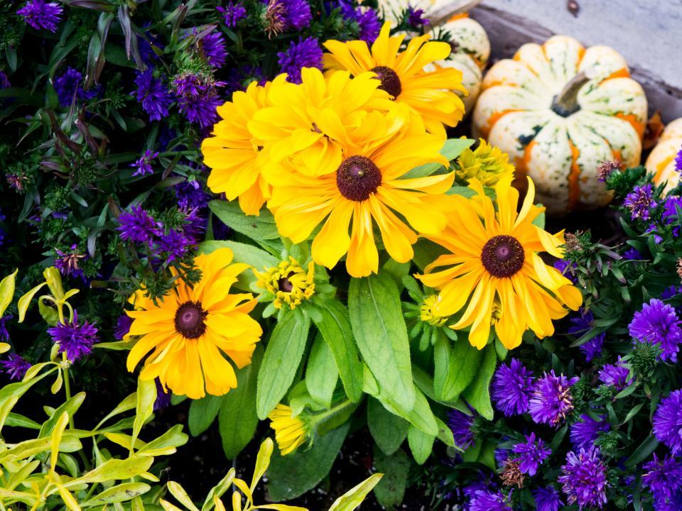 flowers, plants, garden, nature, lawn
