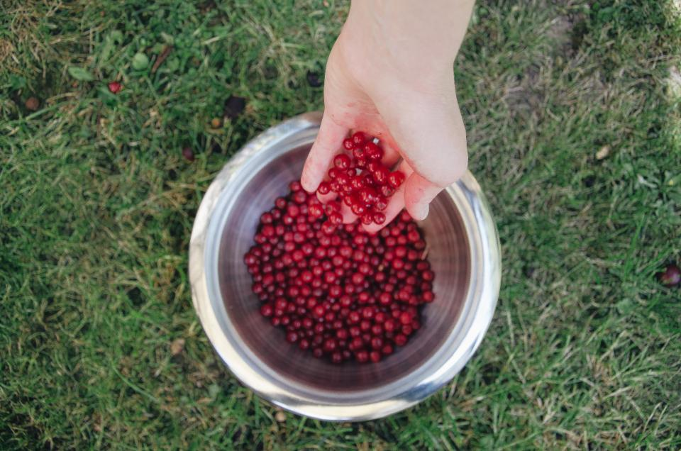 red, berries, fruits, bowl, hands, grass, healthy