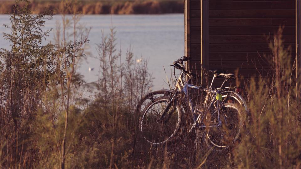 bikes, bicycles, plants, lake, water, wood, fence